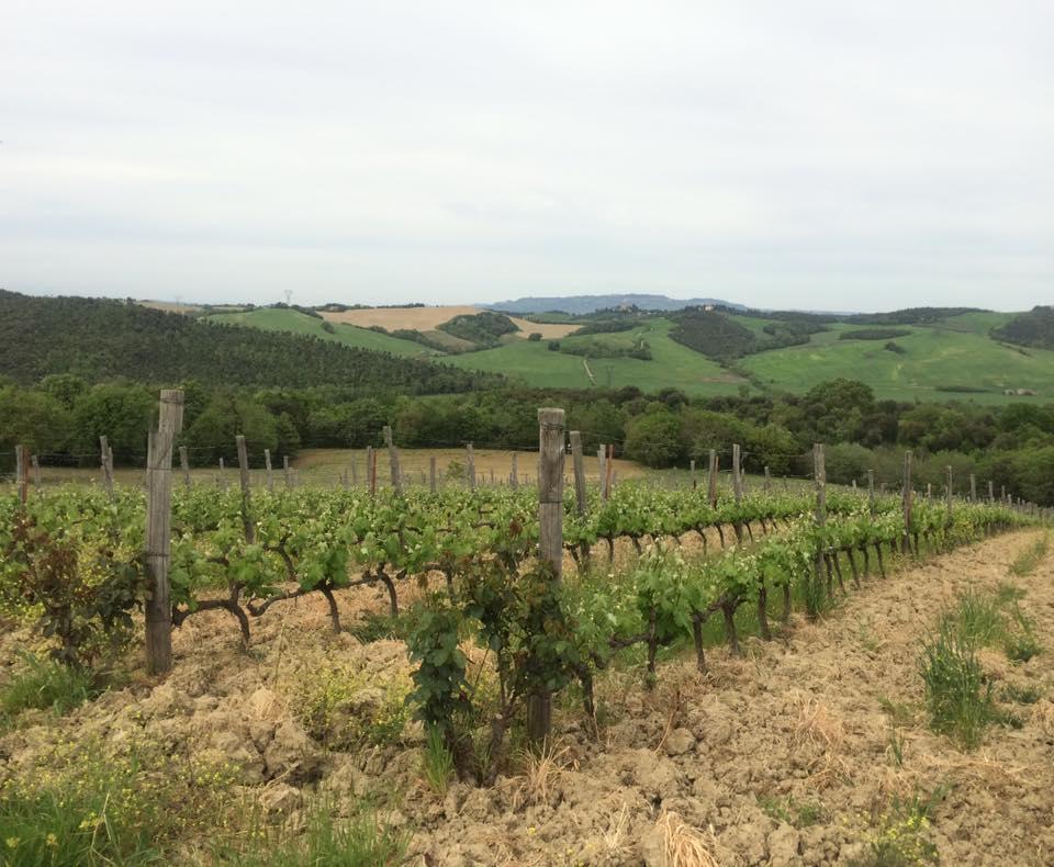 grapes-statiano